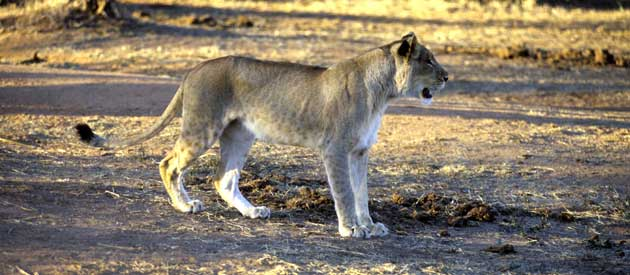 Wildlife threatened by bush meat trade in Southern Africa