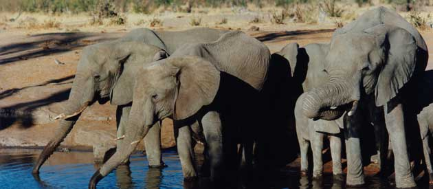Kruger National Park demolishing its artificial water holes to boost rare wildlife