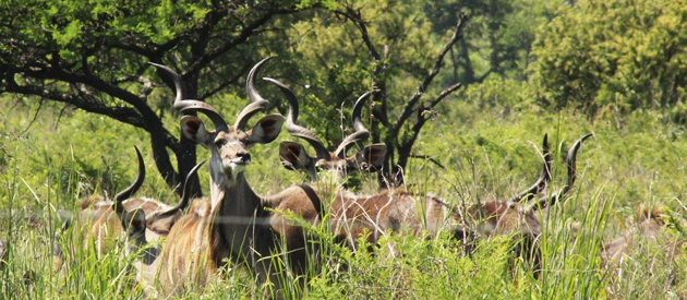SLIEVYRE GAME FARM, ESTCOURT (10km)